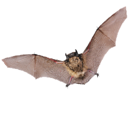郵票     主题蝙蝠  '