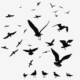 郵票     主题鳥  '