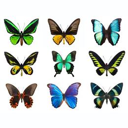 郵票     主题蝴蝶  '