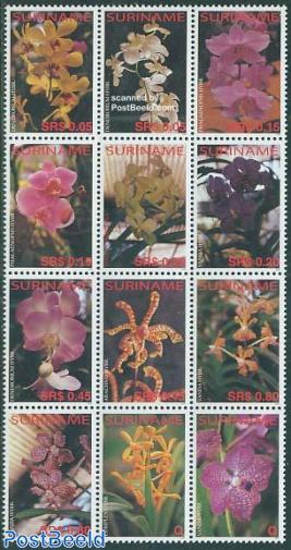 Orchids 12v