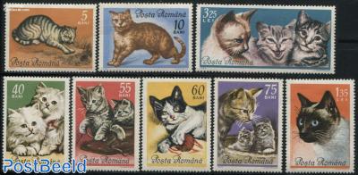 Cats 8v