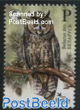 Bird of the Year, Long-Eared Owl 1v